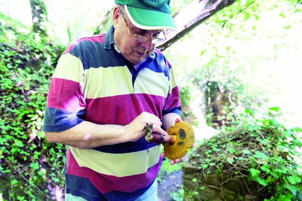 O micólogo valdeorrés Cristóbal Ruiz Leivas, observando un cogomelo./ Foto: Carlos G. Hervella.