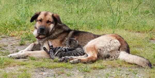 Photo of O mellor amigo do home… e dos gatos