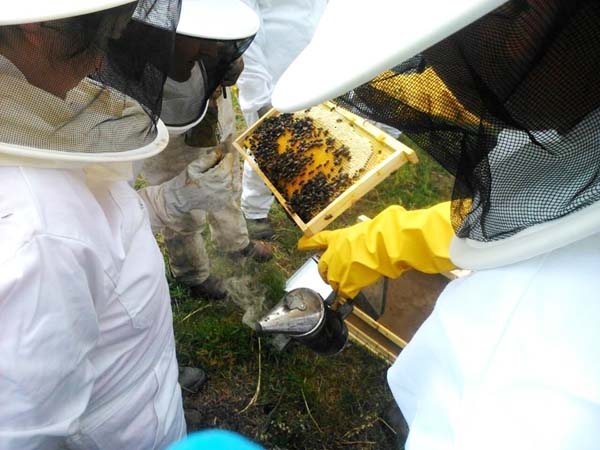 Photo of Entre abellas e colmeas, en Valdín