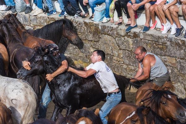 Os aloitadores loitando cun dos cabalos neste antergo ritual. /Foto: Sindo Novoa.