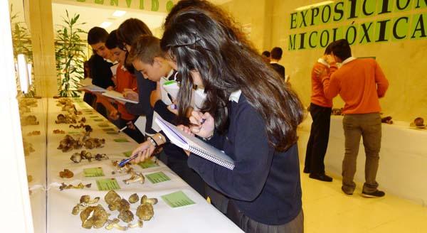 Photo of Exposición micolóxica no colexio Divina Pastora do Barco