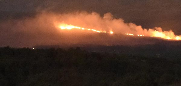 Photo of Lume forestal en Chaguazoso, en Vilariño de Conso