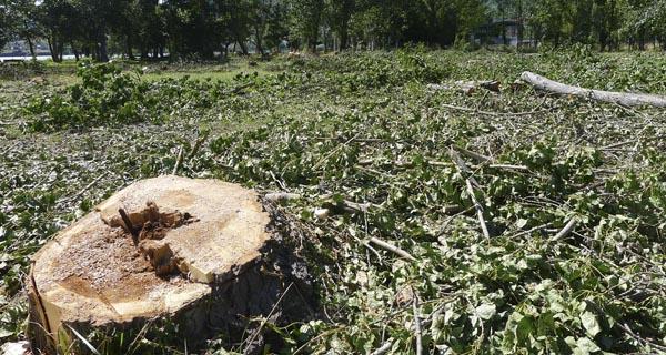 Photo of Comeza a tala de árbores dañadas no Aguillón da Rúa