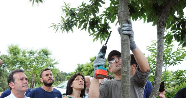 Photo of Loita biolóxica contra o chancro do castiñeiro