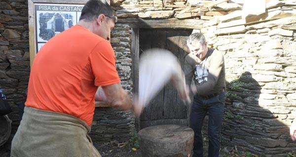 Photo of Froxán festexa a pisa da castaña seca