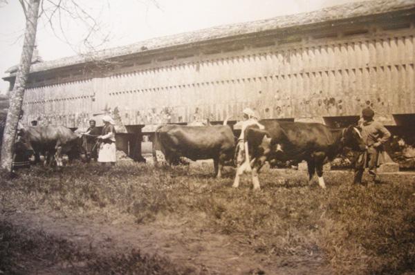 Concurso de control leiteiro realizado na Misión Biolóxica, Pontevedra 1927.