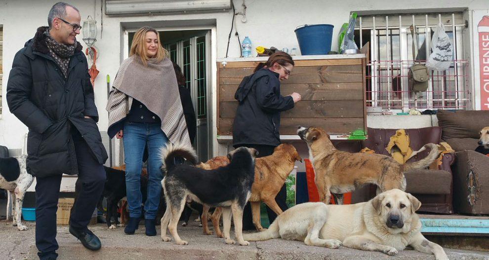 Photo of O Concello inviste 60.000 euros para acondicionar o refuxio de animais de Eiroás