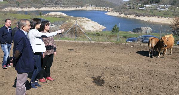 Photo of 800.000 euros de Medio Rural para o fomento do pastoreo no macizo central ourensán