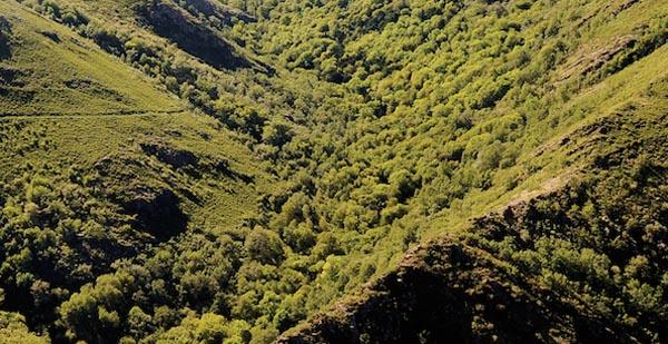 Photo of En Marea pedirá no Parlamento que O Teixadal se declare parque natural