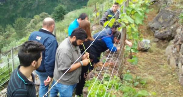 Photo of Alumnos do IES O Ribeiro fan prácticas de viticultura na viña soberina dos Chancís