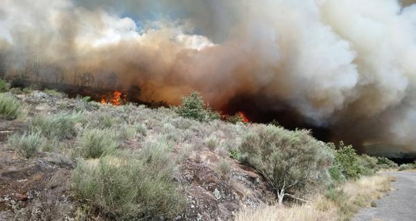 Photo of Un incendio forestal leva queimadas máis de 20 hectáreas en Monterrei