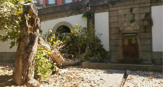 """Photo of Suspéndese a proxección de """"Porco Rosso"""" na Praza de San Marcial pola caída dunha árbore"""