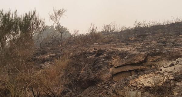 Photo of Na pasada fin de semana ardían en Galicia 35.500 hectáreas