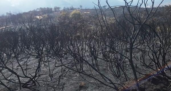 Photo of O lume de Viana, o único que permanece activo en Galicia