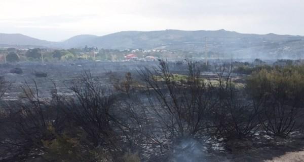 Photo of Medio Rural permitirá excepcións á prohibición de pastorear en zonas queimadas