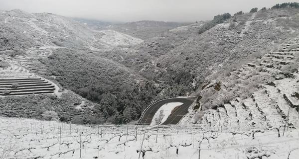 Photo of A neve cubre de branco os bancais de viñedo triveses