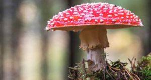 Charla en Vilariño de Conso sobre o aproveitamento forestal sostible