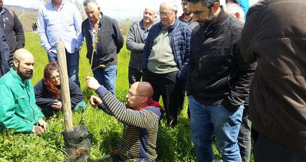 Photo of O curso de poda e enxerta de castiñeiros de Trives reúne a medio cento de persoas