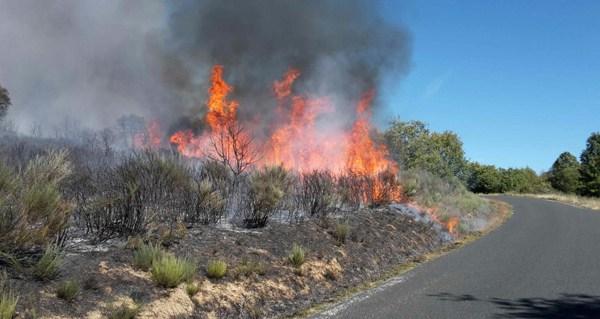 Photo of Vilariño de Conso e Viana do Bolo rexistraban na última década 380 incendios en 5 parroquias