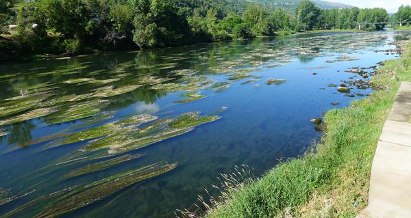 Photo of O Concello do Barco solicita permiso á confederación para limpar as rabazas do río Sil
