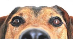 """Valdeorras celebrará o """"Día do Orgullo Canino"""" o 1 de setembro en Vilamartín"""