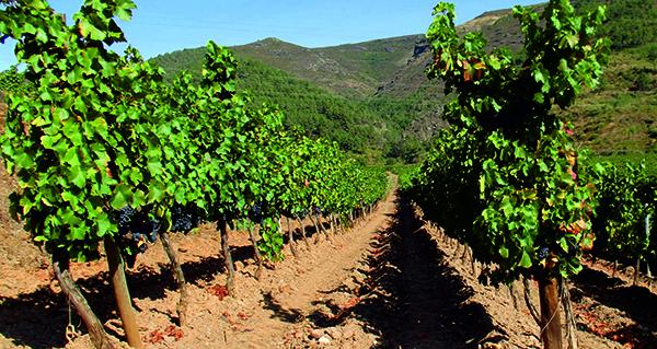 Photo of Un proxecto de investigación permitirá garantir a orixe do viño en Valdeorras