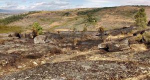 Incendio forestal con dous focos en Barxa (A Gudiña)