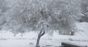A neve viste de branco as paisaxes da montaña ourensá
