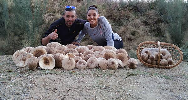Photo of Comeza a recollida de cogomelos