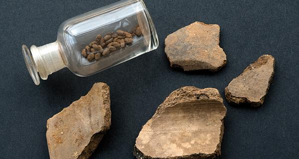 Photo of As sementes do Castro de Trelle, unha aproximación aos comezos da agricultura na provincia