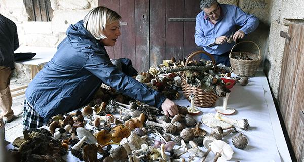 Photo of As Xornadas Micolóxicas consolídanse como cita destacada no outono de Trives