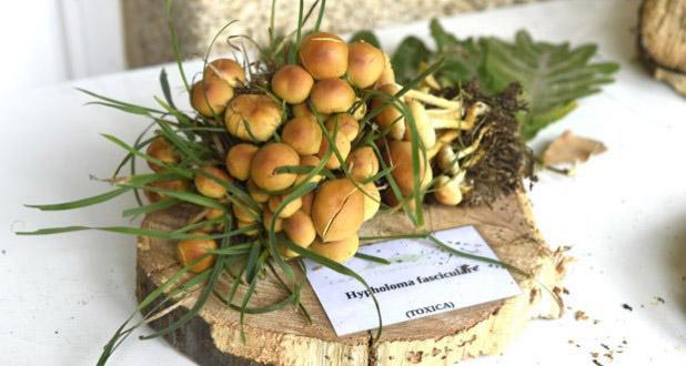 Photo of Recomendacións para evitar intoxicacións con cogomelos