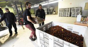 O proxecto da Cooperativa Amarelante de Manzaneda pecha as Xornadas sobre Oportunidades do Medio Rural no Barco