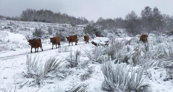 Photo of A neve deixa sentir a súa presenza e cubre as zonas altas ourensás