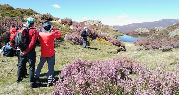 """Photo of """"As Cores de Trevinca"""", unha actividade para desfrutar das aves na alta montaña galega"""