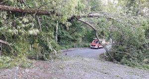 Cortada a estrada de Santigoso (O Barco) pola caída dunha árbore