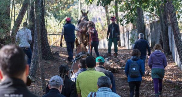 "Photo of Curso de ""Tracción animal na horta"" en Allariz"