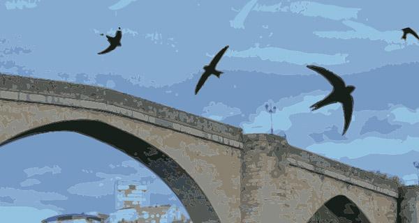Photo of Ourense súmase á celebración mundial do día das aves que durmen voando