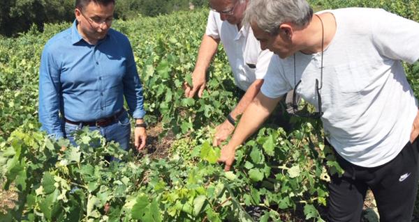 Photo of O conselleiro de Medio Rural comproba os danos da tormenta no viñedo valdeorrés