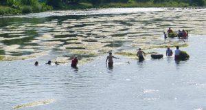 Un grupo de voluntarios retirará as rabazas do río Sil ao seu paso polo Malecón do Barco o 14 de xullo