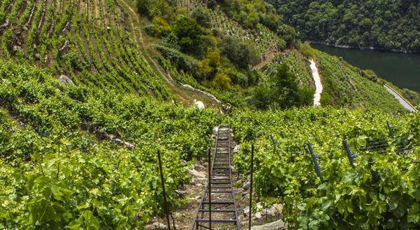 Photo of Os viños da D.O. Ribeira Sacra logran 19 medallas no Mondial des Vins Extrêmes