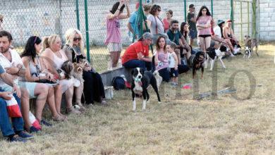 """Photo of Vilamartín celebrará a segunda festa do """"Día do Orgullo Canino"""""""