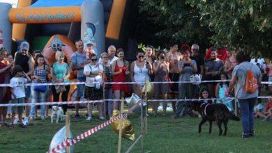 Photo of Boas sensacións na Festa Solidaria de Pro Animais Verín