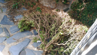 Photo of Os veciños piden a retirada de ramas do cauce do arroio Cigüeño do Barco