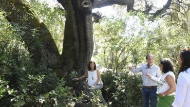 Photo of Serra da Enciña da Lastra, un parque natural cheo de singularidades e que dobrou as súas visitas en agosto