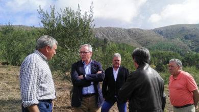 Photo of O director xeral de Agricultura achégase á produción de aceite en Quiroga