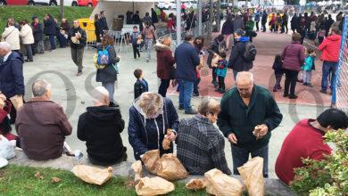 Photo of Magosto popular o día de San Martiño no parque do Barbaña, en Ourense
