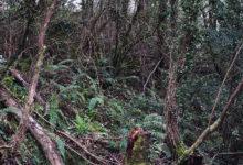 Photo of A Federación Galega de Caza e a Xunta realizarán xornadas preventivas contra os incendios forestaiss