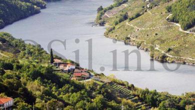 Photo of As pegadas medievais do viño na Ribeira Sacra analizaranse en Monforte o vindeiro venres