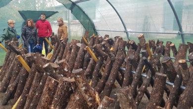 Photo of Shiitaki Trives, unha explotación ecolóxica de cogomelos